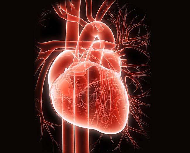 قلب چیست