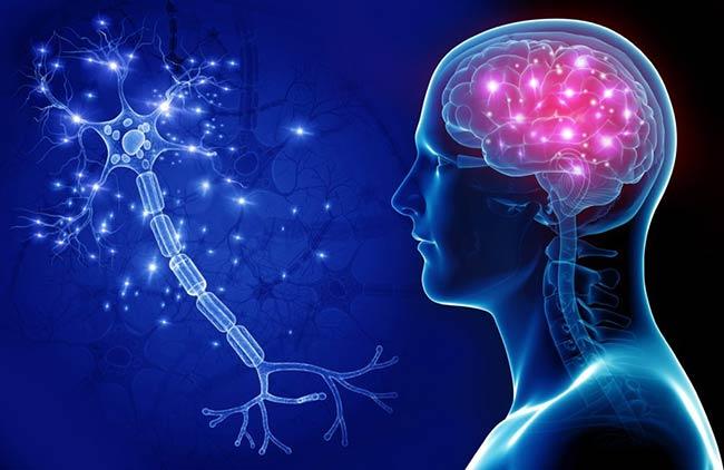 مغز و عملکرد های آن